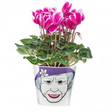 Ghiveci pentru flori, DONKEY Flower Queen Small