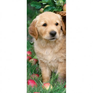 Puzzle Golden retriever, 170 piese, RAVENSBURGER Puzzle Adulti
